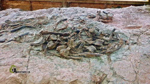 Huesos de estegosáuridos (dinosaurios con placas)