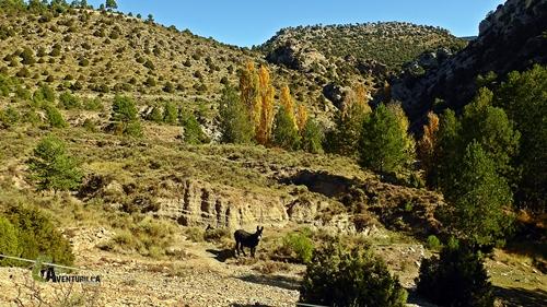 burros en la montaña