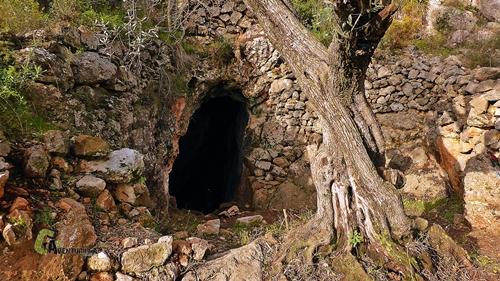 Cova del Tronc