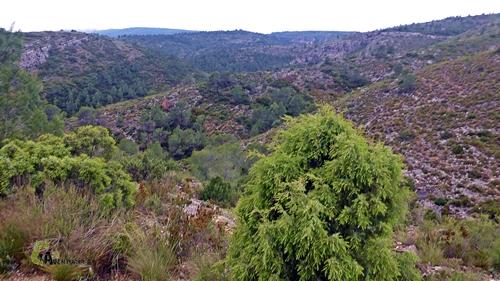 Sierra de Enguera