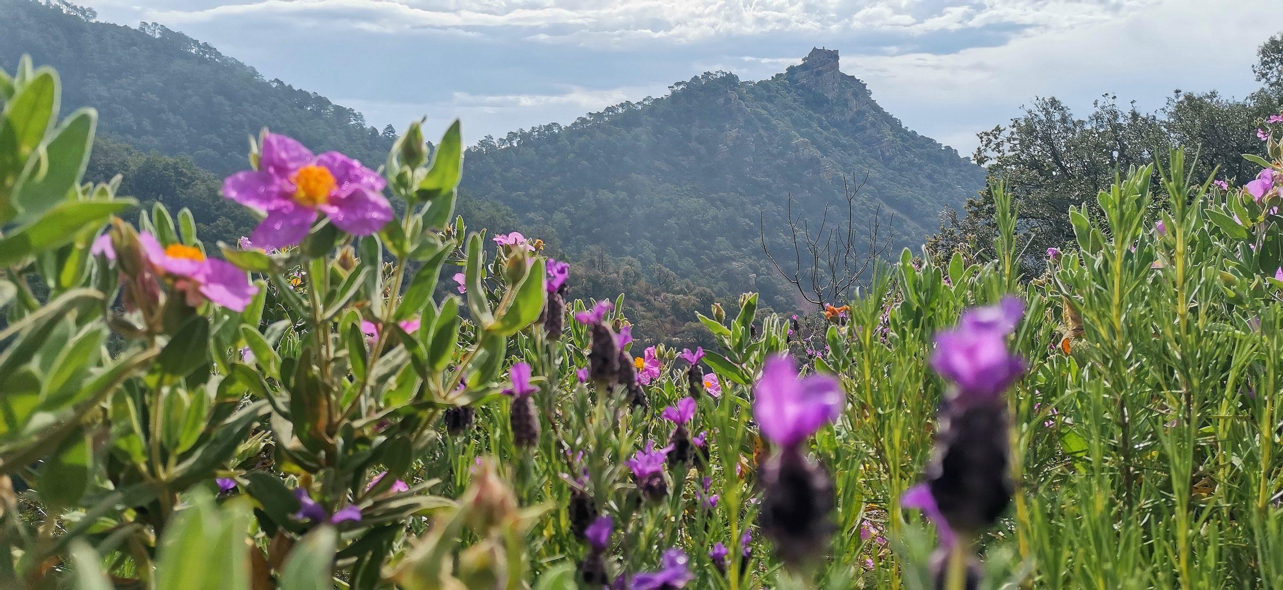 Primavera en la sierra de Espadan