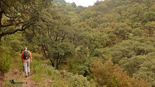 Bosques de Espadan