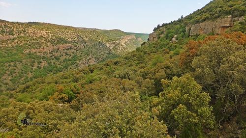 Bosques de robles