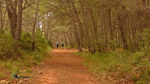Pista foresta en Toga