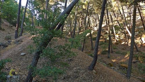 Bosque en Guadalajara