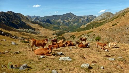 Vacas en el valle de Valverde